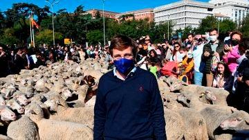 José Luis Martínez-Almeida, un 'pastor' rodeado de ovejas